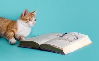 gato de jengibre con libro y gafas