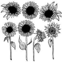 Sunflower Set flower line art on white background illustration. Hand-drawn decorative blooming sunflower elements in vector