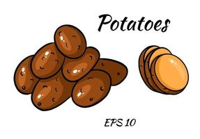 Vector set with colorful image of potatoes. cut potatoes into slices. Vector set isolated on white background.