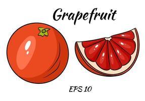 A set of juicy grapefruit. vector