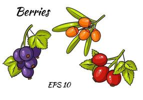 Set of colorful berries. Twigs of red currant, stinging, rose hips. vector