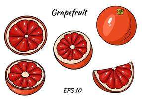 A set of juicy grapefruit. Grapefruit, whole and half cut. Illustrations for design and decoration. vector
