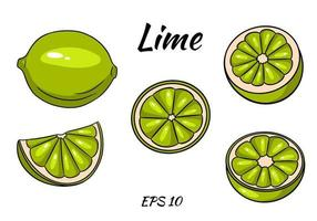 Set of juicy limes. Lime, whole and half cut. Illustrations for design and decoration. vector
