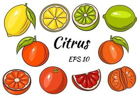 Collection of bright citrus fruits. Lemon, Lime, Grapefruit, Orange, Mandarin. Whole fruit and cut into pieces. vector