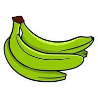 plátano verde colorido. un monton de bananas. para diseño y decoración. vector