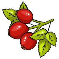 Bright rosehip isolated. Vector illustration isolated on white background.