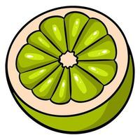 Cut off half of a green lime. Juicy bright green lime. vector
