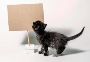 gatito con cartel de cartón en blanco foto