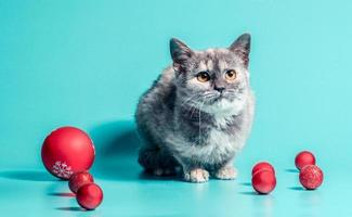 Cat with Christmas baubles photo