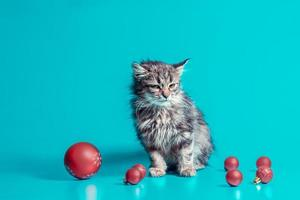 Kitten with Christmas baubles on a blue background photo