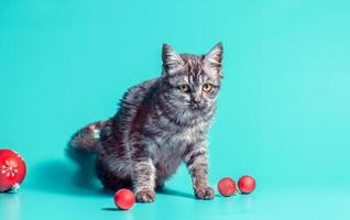 Kitten with red baubles photo