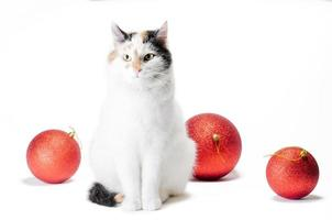 Cat with red baubles photo