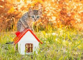 gatito en una casa con hojas de otoño foto