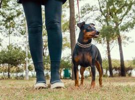 niña caminando con un perro en un parque foto