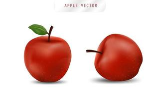 Realistic apple. Fruit and Fresh apple vector. vector