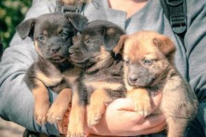 persona con tres cachorros foto