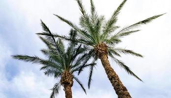 dos palmeras y cielo foto