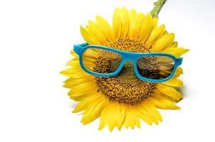 girasol amarillo y gafas azules foto