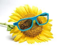 gafas azules en un girasol foto