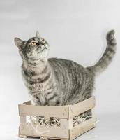 Gray tabby in a crate photo
