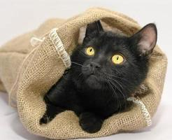 gato negro en una bolsa foto