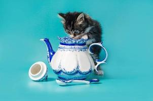 gatito con una tetera foto