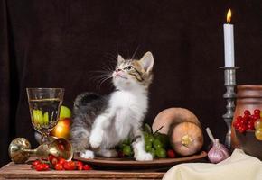 gatito en un escenario de naturaleza muerta foto