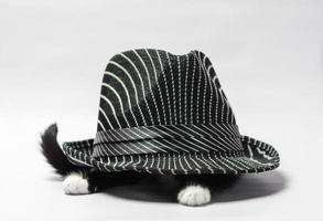 vista lateral de un gato debajo de un sombrero foto