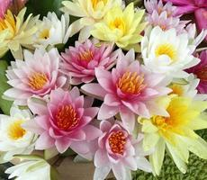 Colorful lotus flowers background photo