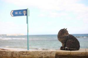 un gato cerca de la costa del mar agua azul foto