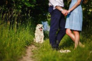 perro feliz está descansando con los dueños en la naturaleza. divirtiéndose con su perro en el parque. foto