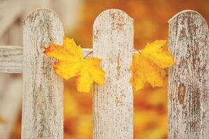 White close-up of a wooden fence with two yellow leaves on it. Autumn background. photo