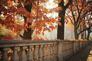 Autumn landscape, autumn city park with fallen yellow autumn leaves and autumn trees. photo
