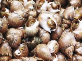 Pile of sea snails
