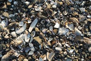 Seashells on the beach photo