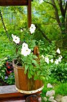 pozo de agua de madera decorado con flores en macetas foto