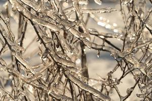 Tree limbs and branches covered in icicles photo