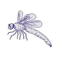 Drawing sketch style illustration of dragonfly flapping wings side view on white background. vector