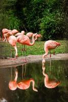 Un grupo de flamencos rosados cazando en el estanque, oasis de hojas verdes en un entorno urbano. foto