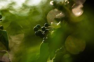 The awakening of nature in spring. photo