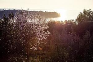 The awakening of nature in spring.