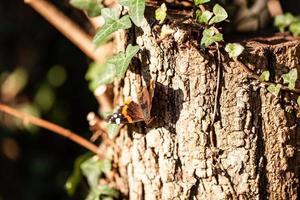 Butterfly on a tree trunk
