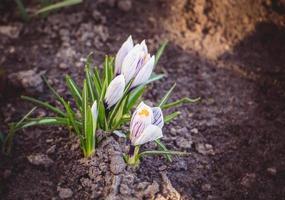 hermosas flores en primavera foto