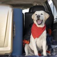 Cute dog with red bandana close up photo