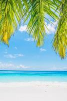 Beautiful tropical beach with palm leaves photo
