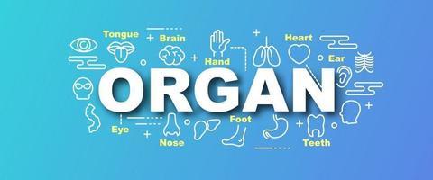 Organ vector trendy banner