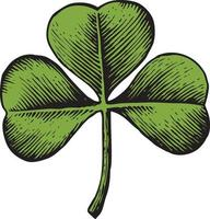 Clover with three leaves vector