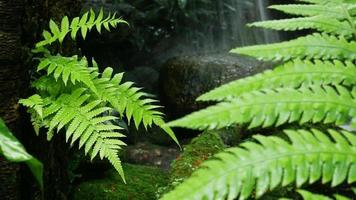 Beautiful Polynesian Foot Fern Next to Small Waterfall