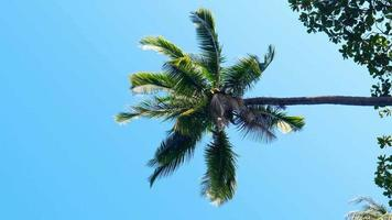 Palm Branch Leaves in Wind over Blue Sky