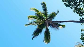 Palmzweigblätter im Wind über blauem Himmel